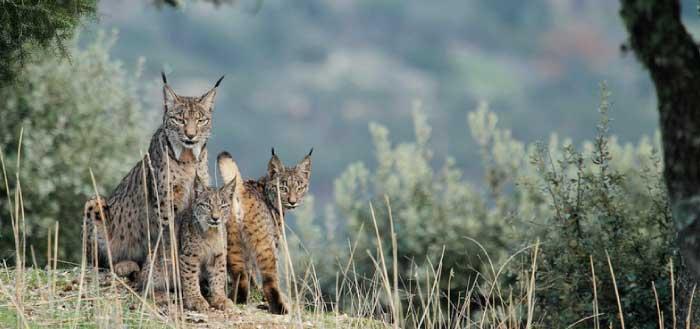 WildMed, el documental sobre Sierra Morena nominado a 8 Goyas
